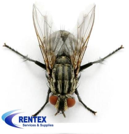 flies killer machine
